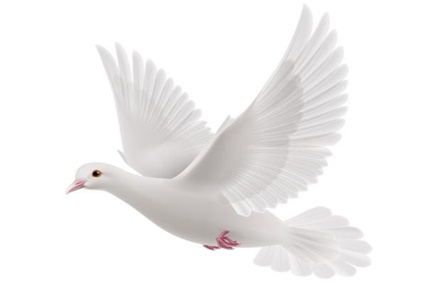 Eine weiße Tauba symbolisiert den Heilige Geist, welcher auf uns herab kommt!
