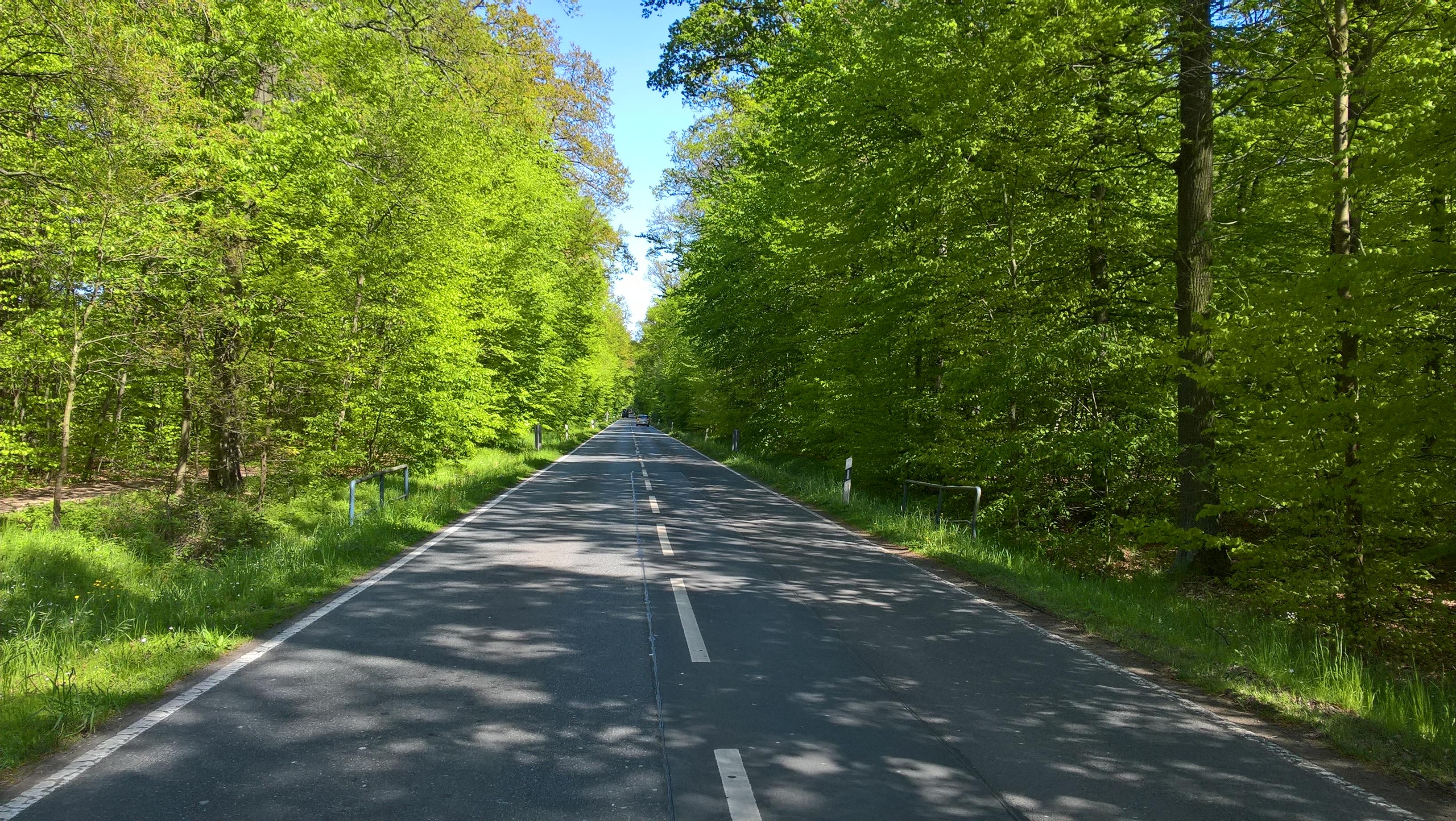 Eine Straße umrandet mit hohen Laubbäumen führt nach vorn.