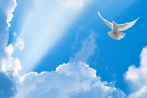 Eine Taube kommt zwischen hellen Wolken vom blauen Himmel auf uns herab.