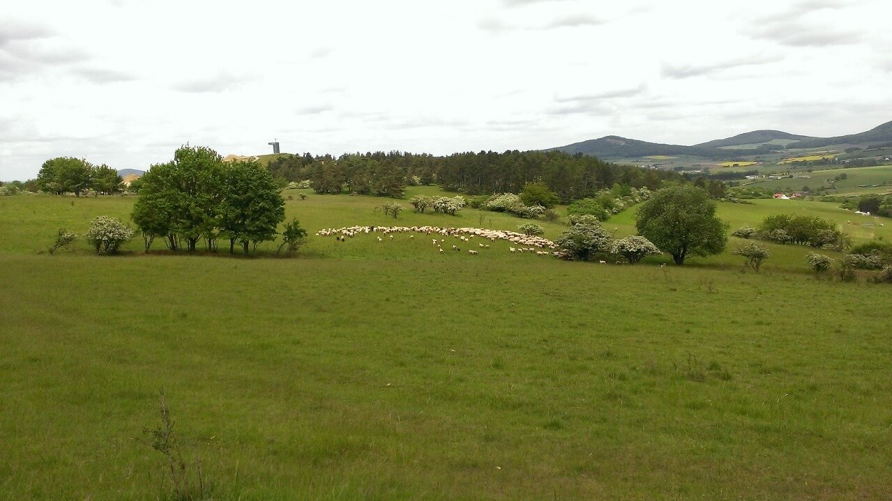 Schafe weiden verstreut auf einer grünen Aue.