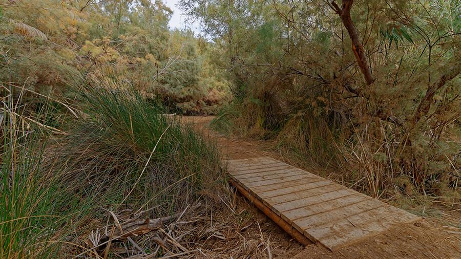Über eine Holzbrücke führt ein Weg zu einer Lichtung.